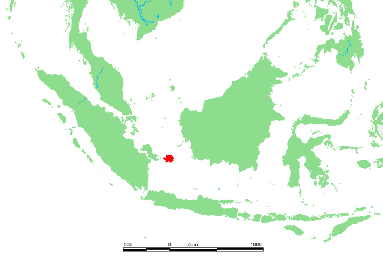 Bangka, my home, is the seahorse-shaped island to the west of the red island. Belitung is in red, flanked by Borneo to the east and Sumatra to the west.